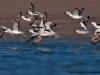 Birds at Little Rann of Kutch Wildlife Sanctuary
