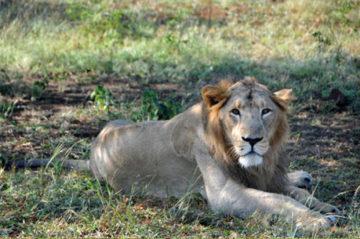 Gir National Park Weekend Getaway