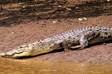 Simlipal National Park Weekend Getaway