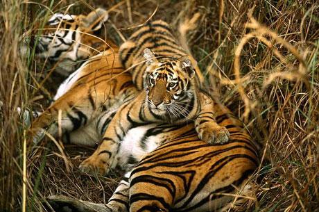 India Nepal Wildlife Tour