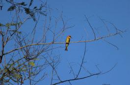 Birding tours in Corbett National Park
