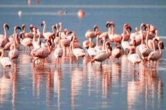 Chilka Lake Bird Sanctuary, Orissa