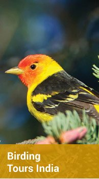 Birding Tour