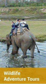 Wildlife Adventure Tours