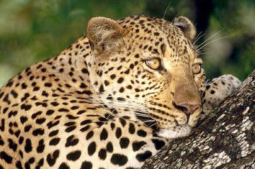 All india wildlife tour