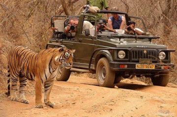 Bandhavgarh National Park Weekend Getaway