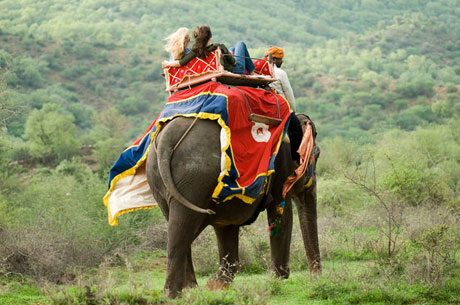 Elephant Safari Tour Corbett National Park