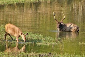 Kanha National Park Weekend Getaway