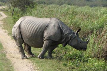 Kaziranga National Park Weekend Getaway