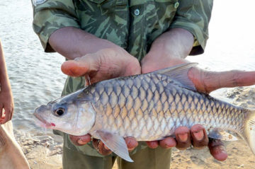 mahseer angling north india tour