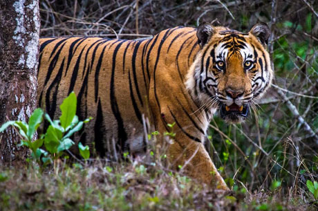 Nagarhole National Park Weekend Getaway