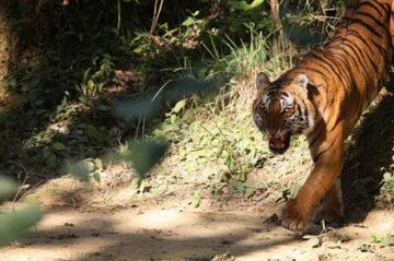 Taj Mahal and the tale of Tiger Tour