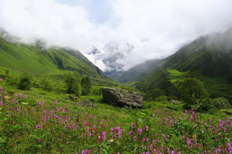 Valley of Flowers National Park Tour