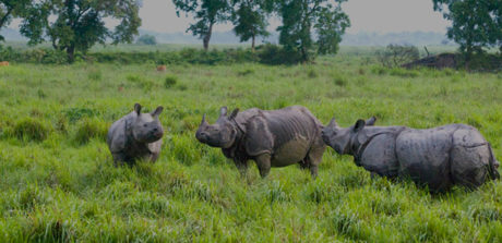 Welcome To Kaziranga National Park Assam India