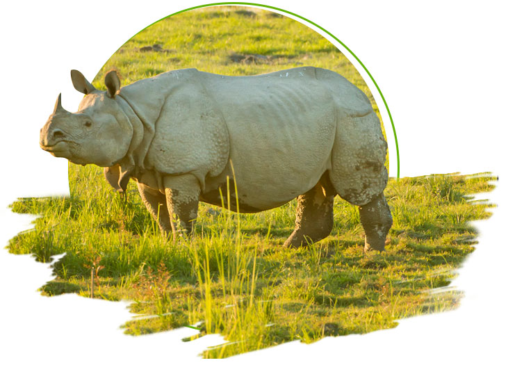 rhino in jungle