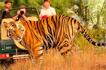 inside indian jungles kanha national park