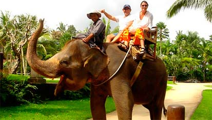 elephant safari in india