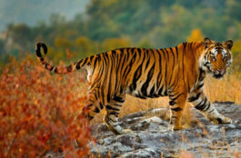 Wildlife In India: step into the real-life Jungle Book
