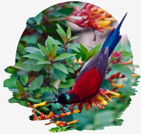 flora in corbett naitonal park