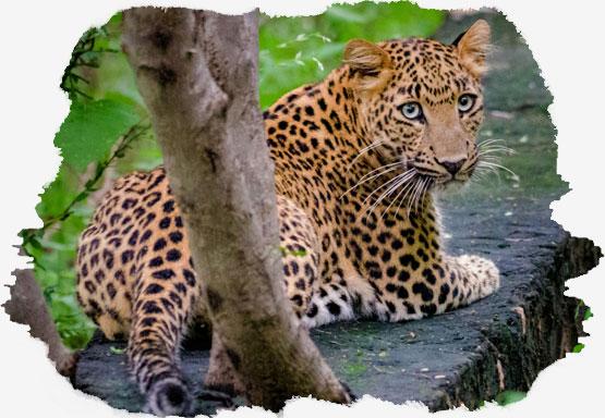 Dhela Safari Zone jim corbett