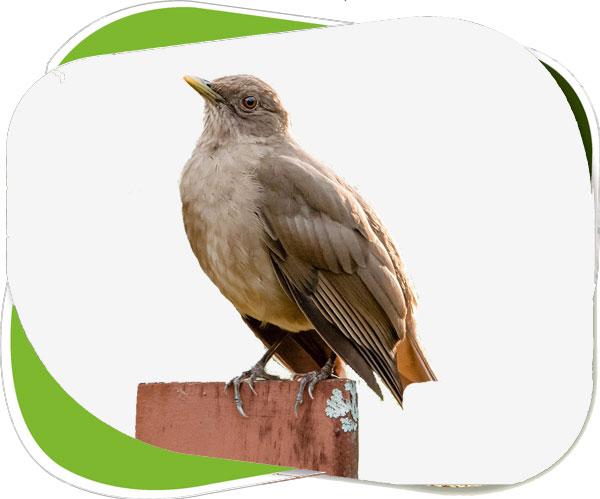 Bird Watching Corbett National Park