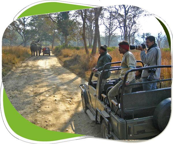 jungle Safari corbett national park