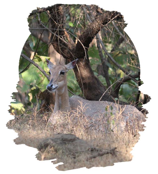 Visit Gir National Park