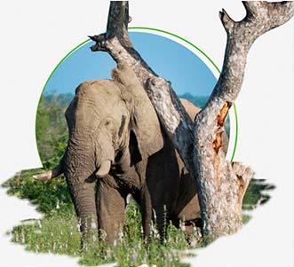 Meet Indian Elephants on India Wildlife Tour