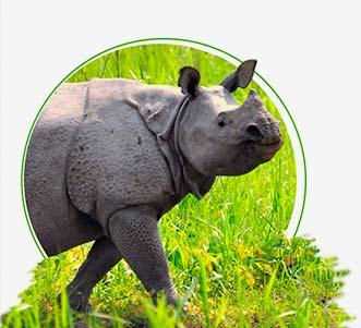 Meet Indian Rhino on Famous Indian Wildlife Tour