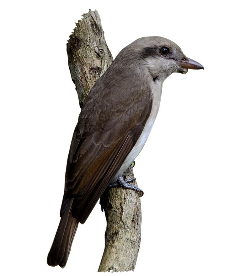 Bird In Manas National Park