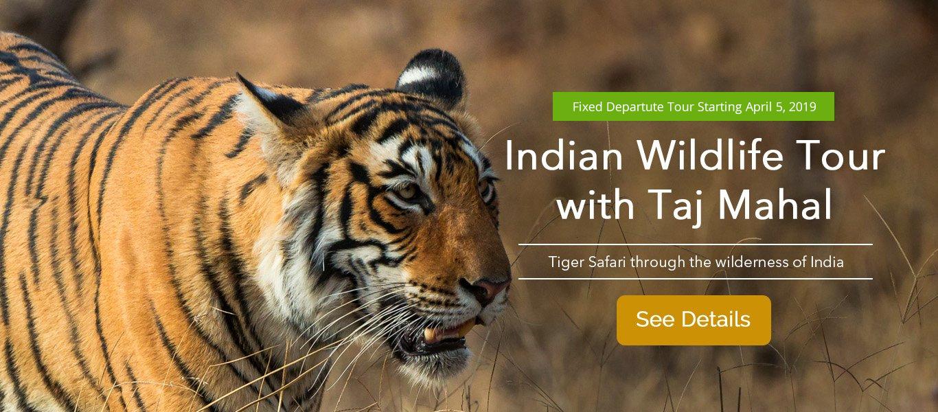 India Wildlife Tour With Taj Mahal