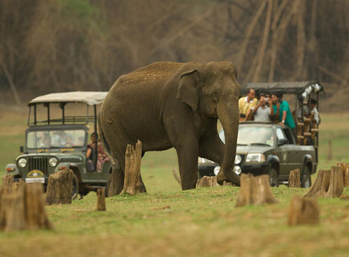 safari exp
