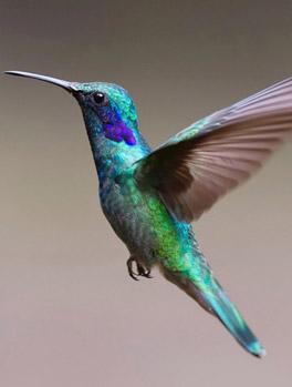 Birding Tours India