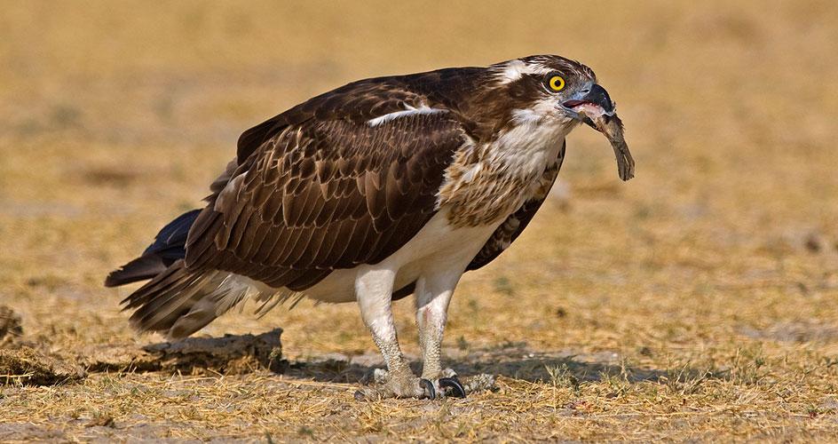 Gujarat birding