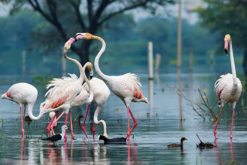 Bharatpur bird