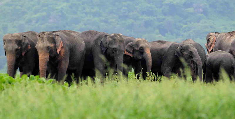 Kaziranga National Park India