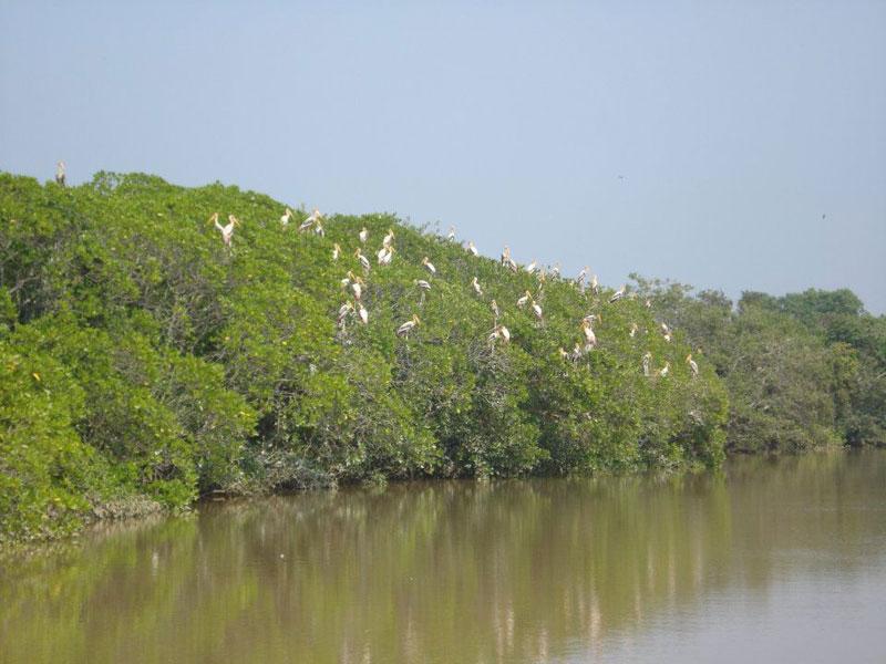 Bhitarkanika bird sanctuary