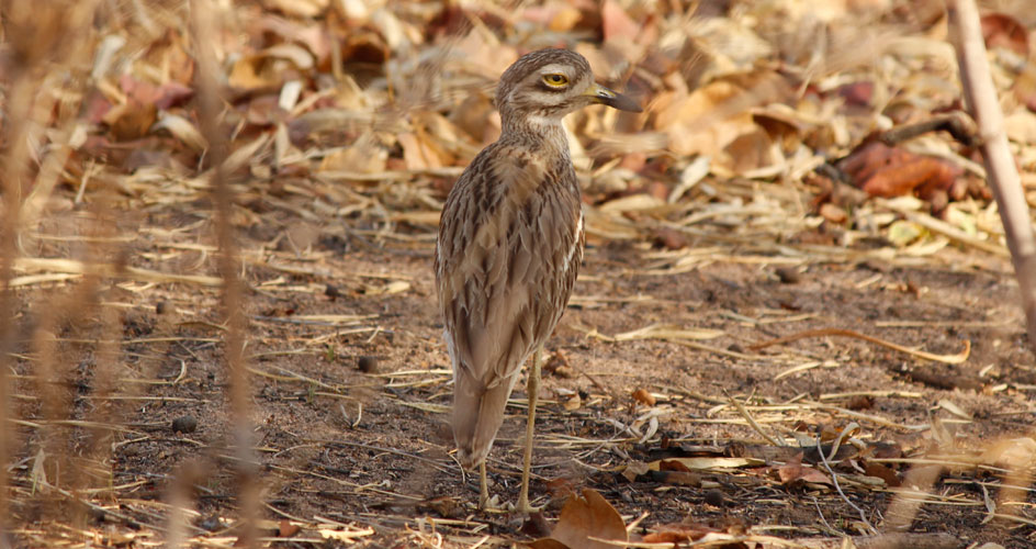 birds in bandhavgarh