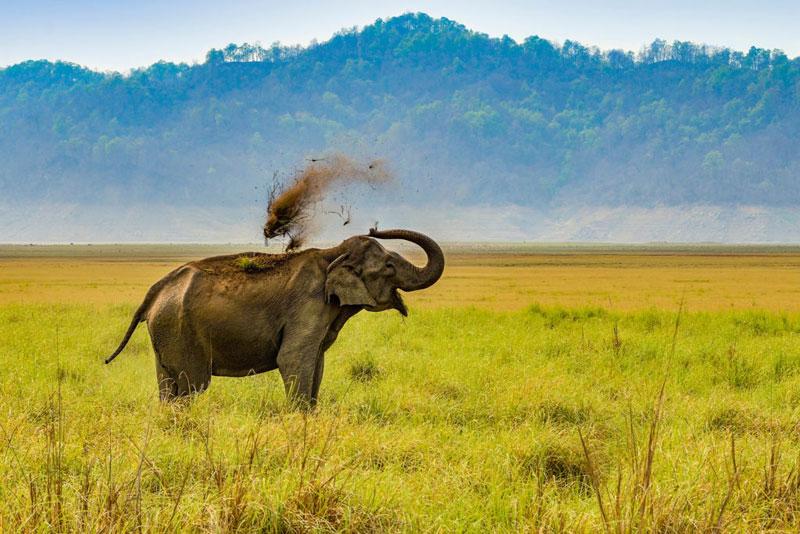 corbett elephant mudbath