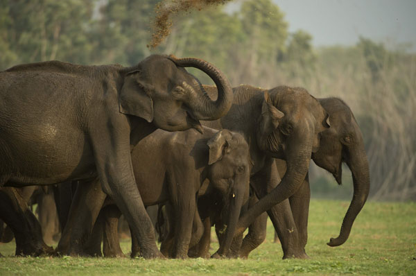 Periyar National Park Weekend Getaway