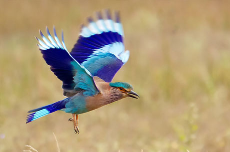 Bird Watching Tour at Himachal Pradesh
