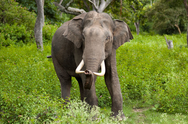 Kerala Wildlife Tour