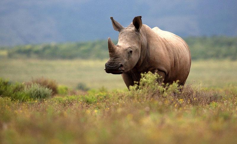 Rhino in Kaziranga National Park