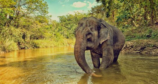 elephants rajaji