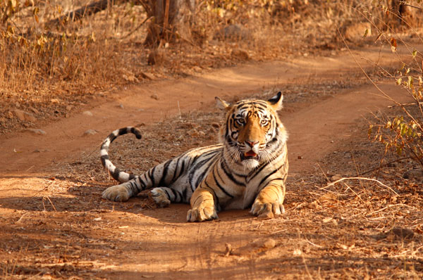 Ranthambhore National Park Weekend Getaway