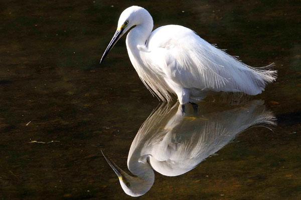 sultanpur birds