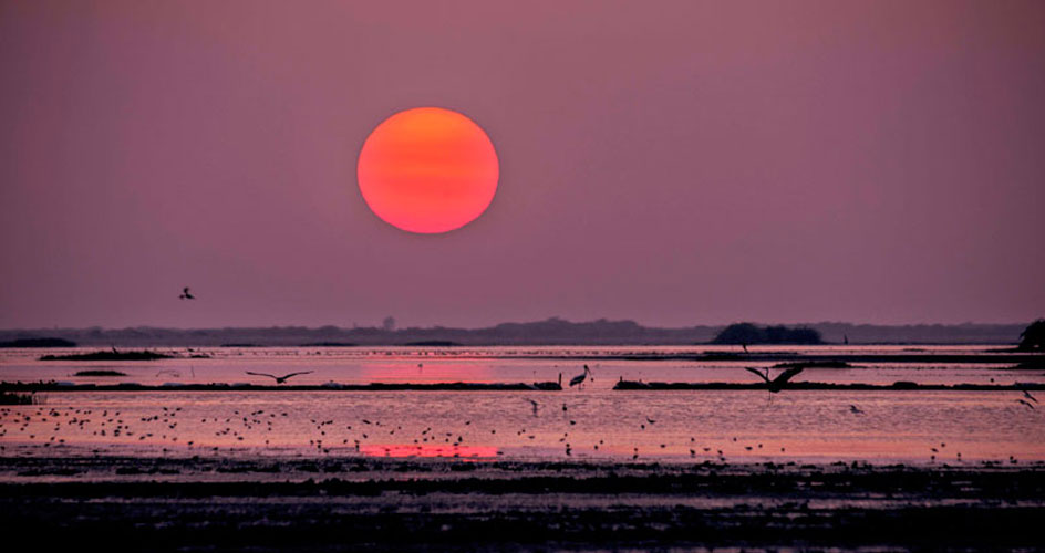 sunrise at runn of kutch