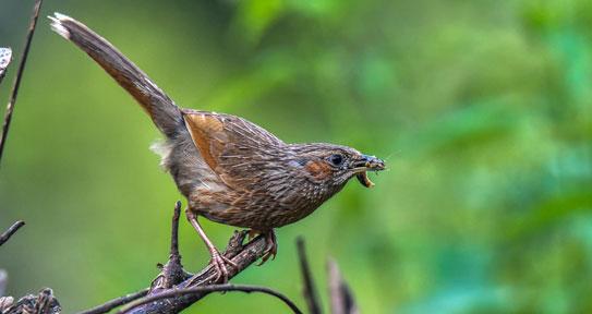 uttarakhand birding