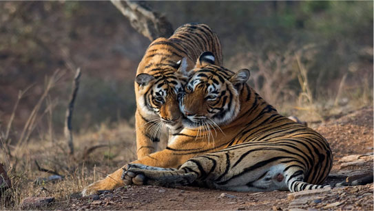 Ranthambore National Park - Best Tiger Safari in India Destination